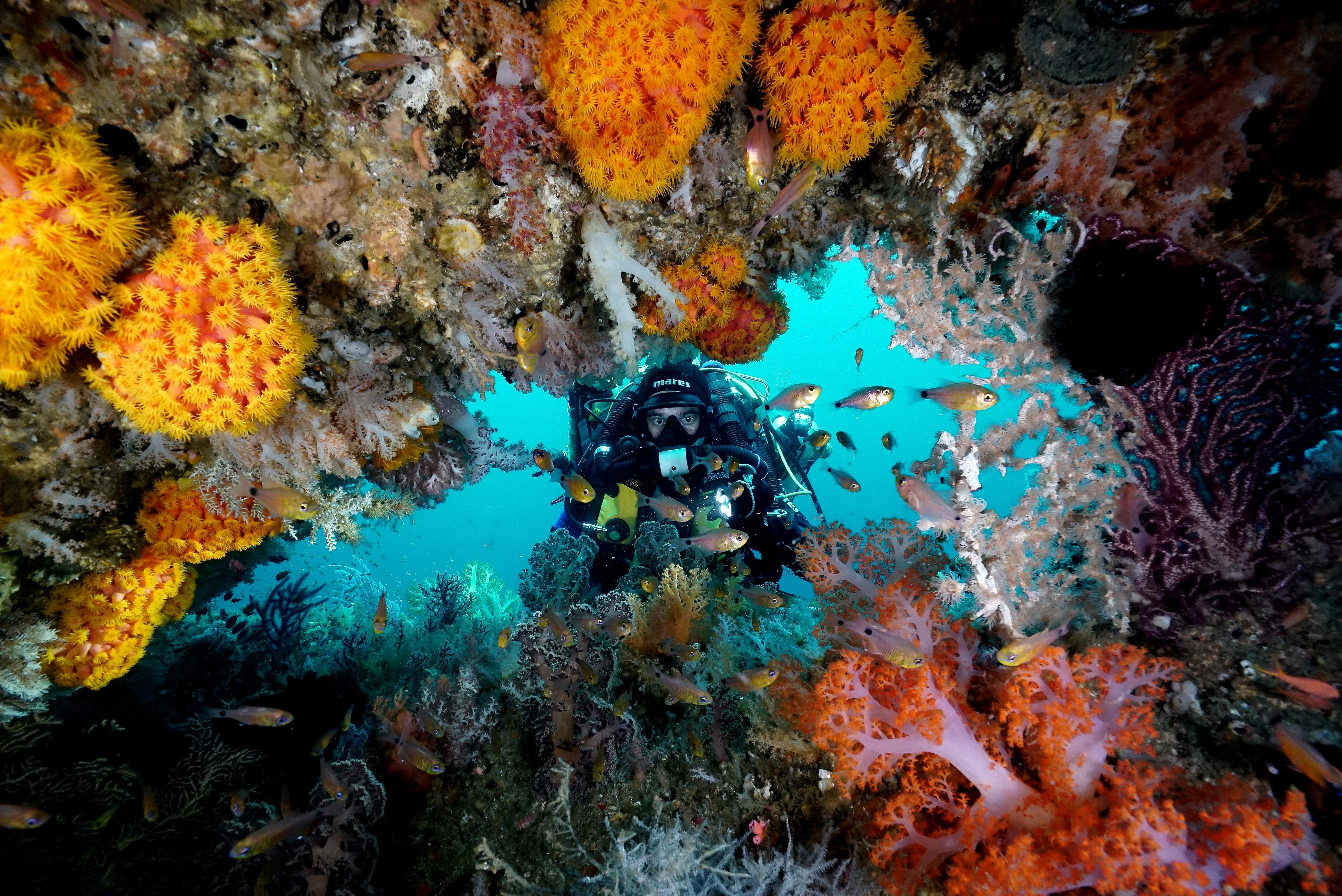 La diversité des poissons du Triangle de Corail révélée par l'ADN environnemental   Site Web IRD